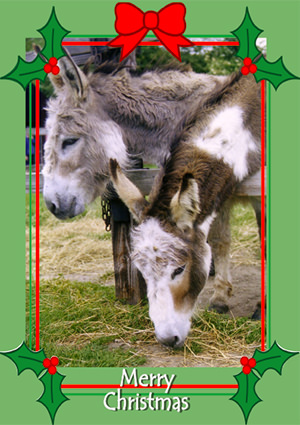 Pack 34 - Donkeys