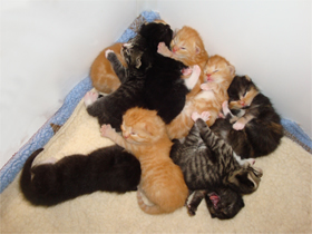 Kittens in a heap
