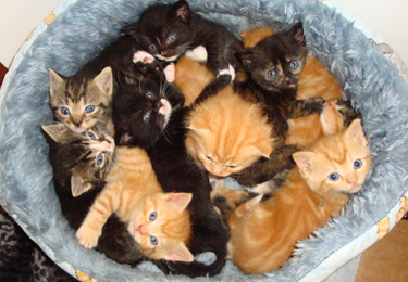 Ten Kittens in a Basket
