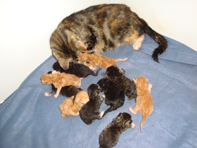 Mother &amp kittens exhausted!